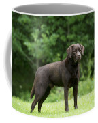 Chocolate Labrador Coffee Mug
