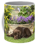 Chocolate Labrador Puppy Coffee Mug