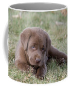 Chocolate Labrador Puppy Coffee Mug