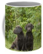 Chocolate Labrador Retriever Puppies Coffee Mug