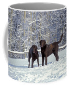 Chocolate Labrador Retrievers Coffee Mug