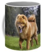 Chow Chow Dog Coffee Mug