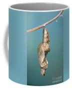 Chrysalis Of Gulf Fritillary Agraulis Coffee Mug