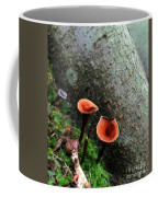Cinnamon Polypore  Coffee Mug