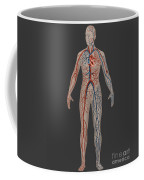 Circulatory System In Female Anatomy Coffee Mug