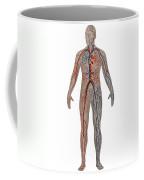 Circulatory System In Male Anatomy Coffee Mug