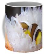 Clarks Anemonefish In White Anemone Coffee Mug
