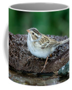 Clay-colored Sparrow Spizella Pallida Coffee Mug
