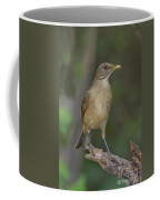 Clay-colored Thrush Coffee Mug