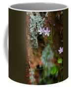 Claytonia And Rust Coffee Mug