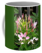 Cleome Named Cherry Queen Coffee Mug