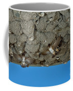 Cliff Swallows At Nests Coffee Mug