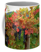 Close-up Of Cabernet Sauvignon Grapes Coffee Mug