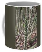 Close Up Of Long Cactus With Long Thorns  Coffee Mug