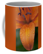 Close-up Of Orange Lily Flower After Coffee Mug