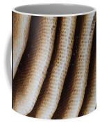 Close-up Of Wild Honey Bee Combs Coffee Mug