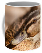 Close Up Shot Of Female Mallard Duck Coffee Mug