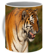 Closeup Portrait Of A Siberian Tiger  Coffee Mug