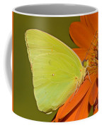 Cloudless Sulphur Butterfly Coffee Mug