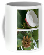 Clusia Rosea - Clusia Major - Autograph Tree - Maui Hawaii Coffee Mug by Sharon Mau