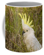 Cockatoo Portrait  Coffee Mug