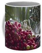Cocos Nucifera - Niu Mikihilina - Palma - Niu - Arecaceae -  Palmae Coffee Mug