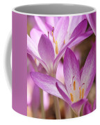 Colchicum Curves Coffee Mug