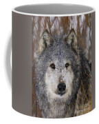 Cold Stare Coffee Mug