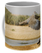 Collared Dove  Coffee Mug