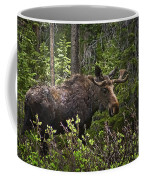 Colorado Moose Coffee Mug