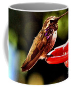 Colorful Juvenile Humingbird Coffee Mug
