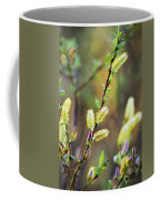 Spring Pussy Willows Coffee Mug