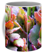 Colorful Succulents In Stereo Coffee Mug