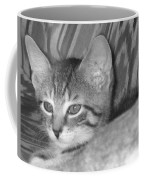 Comfy Kitten Coffee Mug