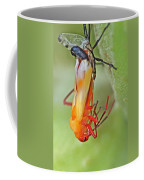 Coming Of Age - Large Milkweed Bug - Oncopeltus Fasciatus Coffee Mug