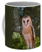 Common Barn Owl 1 Coffee Mug