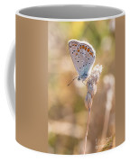 Common Blue Butterfly Coffee Mug