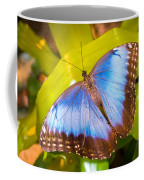 Common Blue Morpho Coffee Mug