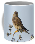 Common Kestrel Falco Tinnunculus 3 Coffee Mug