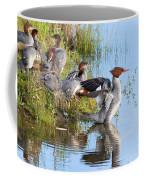 Common Merganser Family 2a Coffee Mug