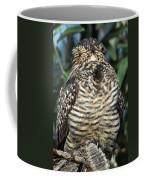 Common Nighthawk Napping Coffee Mug
