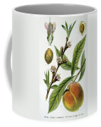 Common Peace Persica Vulgaris Coffee Mug