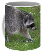 Common Raccoon Coffee Mug