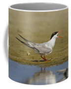 Common Tern Sterna Hirundo Coffee Mug by Eyal Bartov