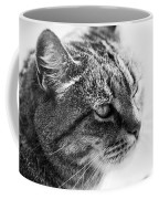 Concentrating Cat Coffee Mug