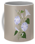 Convolvulus Cneorum Coffee Mug by Frances Buckland