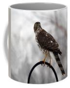 Coopers Hawk Coffee Mug