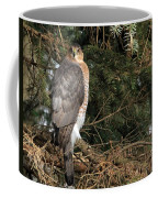 Coopers Hawk In Predator Mode Coffee Mug