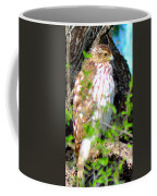 Cooper's Hawk Coffee Mug