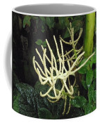 White Palm Flower In Costa Rica Coffee Mug